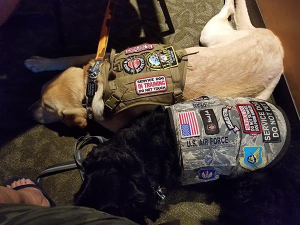 JAVELAN Service Dogs